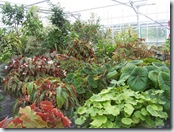 2010.08.13-013 plantes vertes