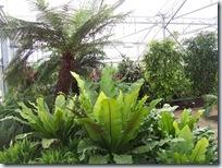 2010.08.13-020 plantes tropicales