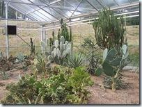 2010.08.13-023 plantes de climat sec