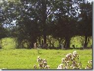 2010.09.04-024 lamas