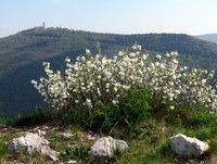 Sveta gora na nasprotnem bregu Soče
