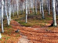 Z listjem prekrite gozdne poti