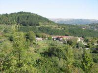 Sokoliči