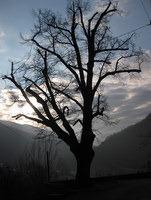 Drevo v jutranjem soncu