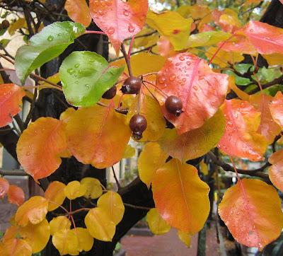 Fall has gone / L'automne s'en est alle