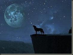 lobo-lua1