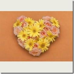 flower0009_c01sln_thl