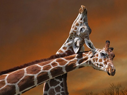 giraffe-mother-calf-080609_3634_990x742