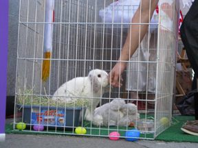 Our Easter Bunny Mattie enjoying pets.