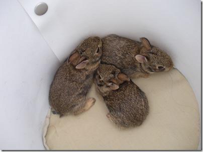 bunnies 6-27 038
