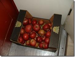 Apples 2010 004