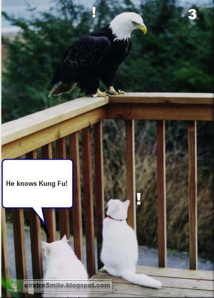 kung Fu CAT.jpg