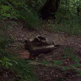 Ruindel från Berghof