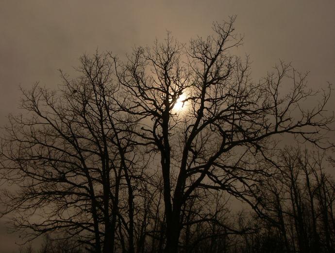 421 sol de invierno