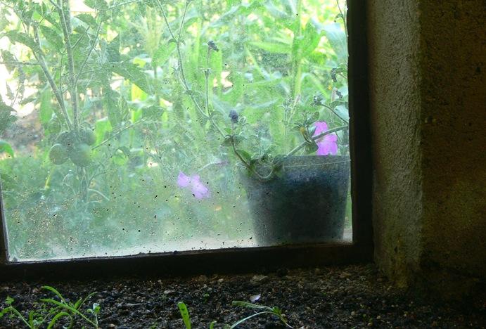 395 ventana de invernadero