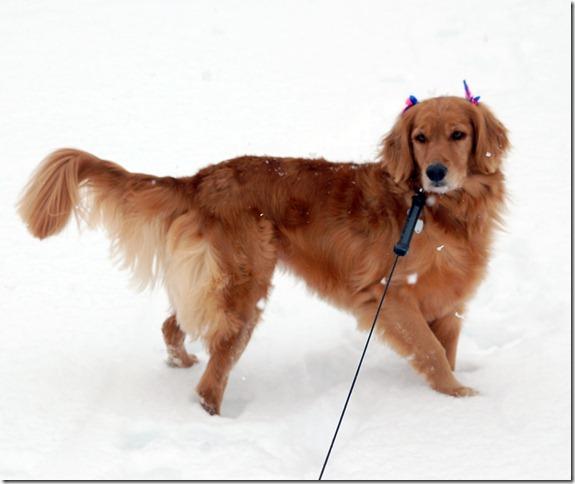 sleddingdog