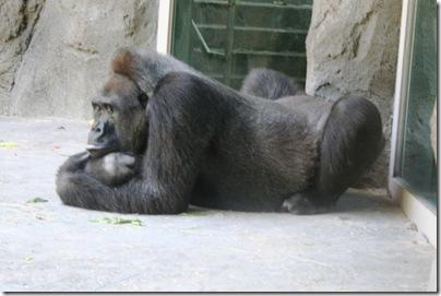 Dallas Zoo 024