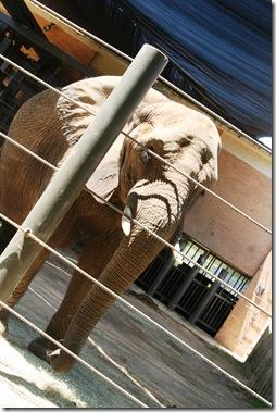 Dallas Zoo 038