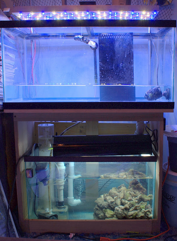 Chaz 39 S Led Powered 50g Breeder Michigan Reefers