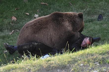 bear-attack-3