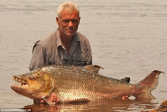 River Monster - Giant Piranha 03