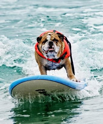 Dogs Surfing at California Beach 01