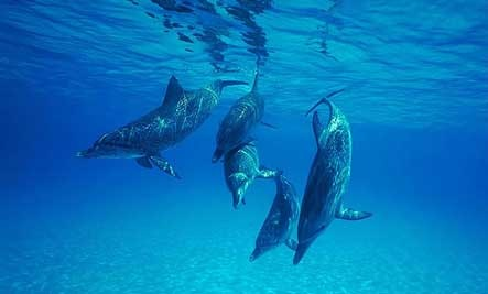 dolphins-ebberly
