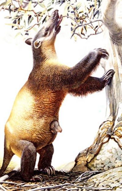 Tasmanian-megafauna-pictue