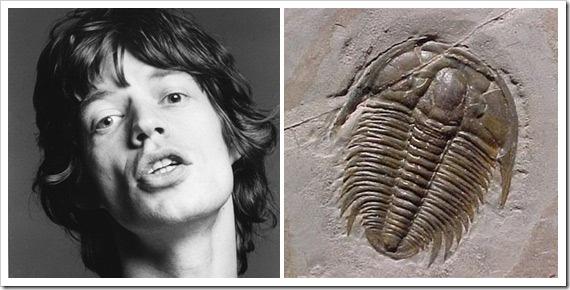 Aegrotocatellus-Jaggeri