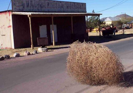 tumbleweed%5B7%5D.jpg