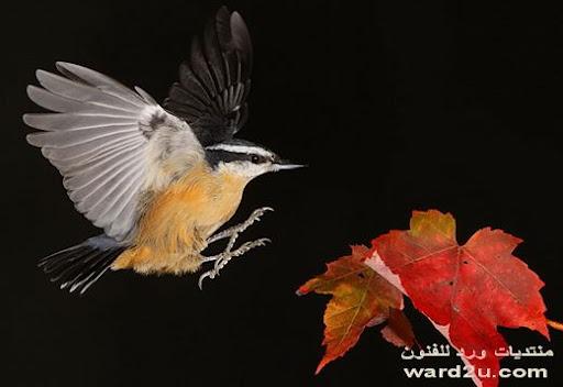 طيور واجنحه ترفرف فى الهواء
