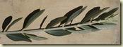 olive branch_r1_1_1