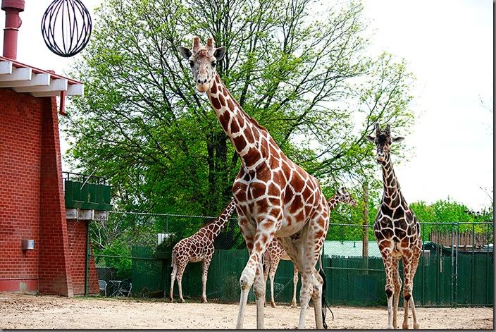 Zoo38