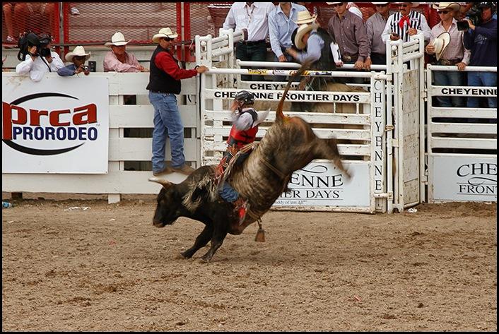 Bulls1