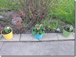 garden etc 049