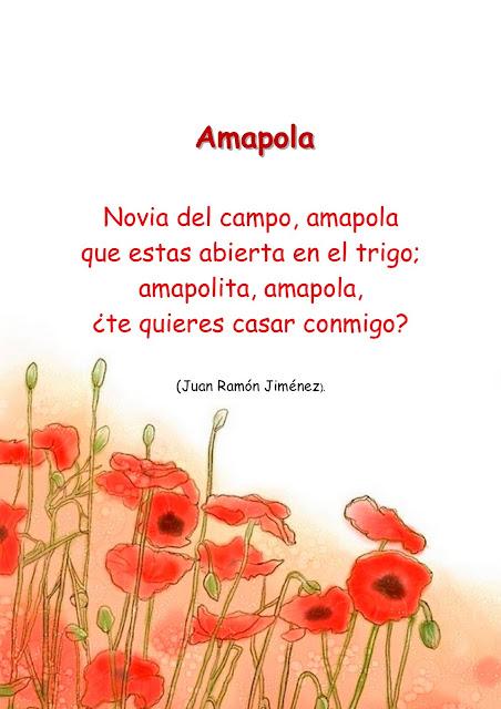 Amapola Juan Ramòn Jimenez 8