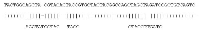 An alignment of a genomic DNA sequence and a cDNA sequence. A match is indicated by a vertical bar, a mismatch is indicated by a blank, each intron deletion gap is indicated by a number of plus symbols, and other gaps are indicated by a number of dash symbols. This alignment contains 24 matches, 1 mismatch, an exon deletion gap of length 2, an insertion gap of length 1, and three intron deletion gaps of lengths 7, 16, and 11