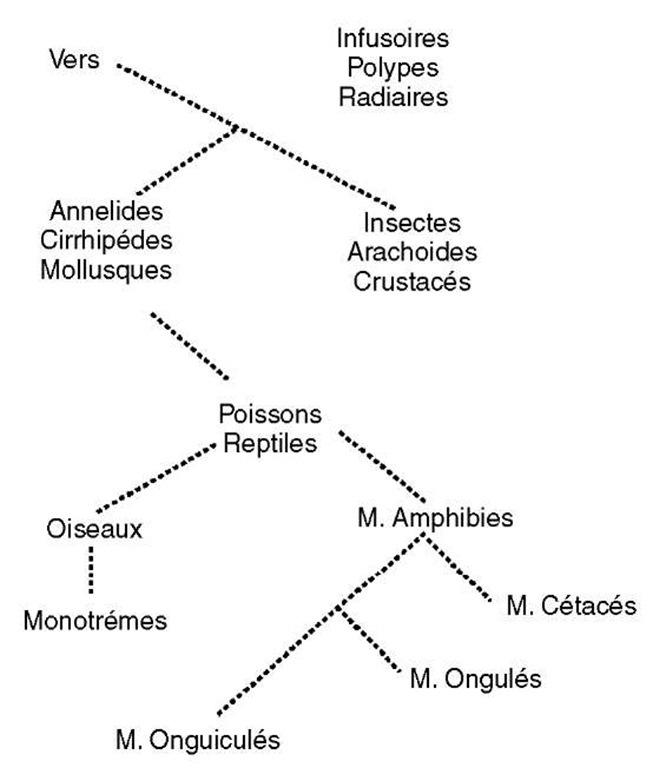 Reconstructing Vertebrate Phylogenetic Trees Bioinformatics