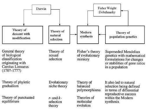 thesis statement for darwin theory of evolution