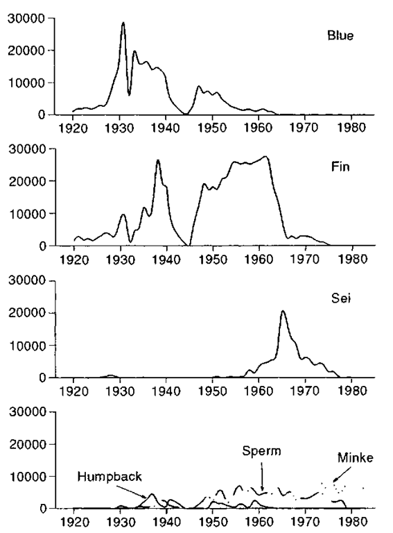 Changes in the number of each species of whale caught in the industrial whale harvest in the Southern Ocean.