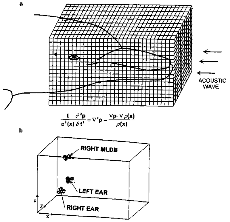 (a) Configuration of numerical simulation of sound propagation in the head of a dolphin to determine acoustic focal regions and (b) results of numerical simulation for the geometry depicted.