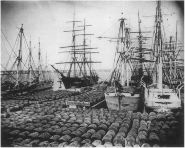 Casks of oil line the New Bedford.