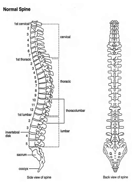 Clinical Trials Within U.S.: Spinal Cord injury (Stem Cell)