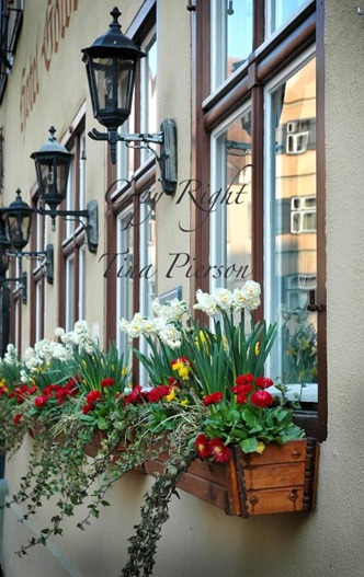 Window Box with Copy Right