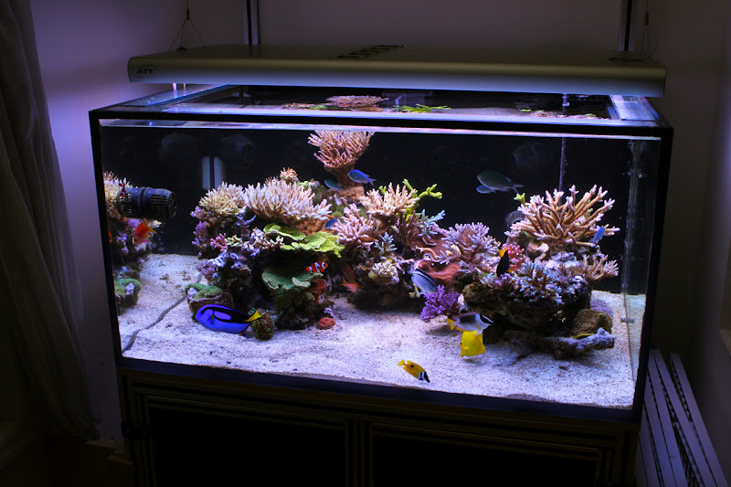 Aquascaping Show Your Skills Page 12 Reef Central Online Community