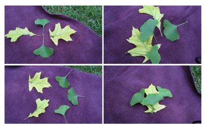 Leaves-2010-06-26-23-40.jpg