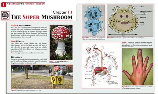 reinocogumelos