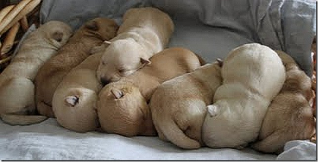 lynn's pups 4-18-11