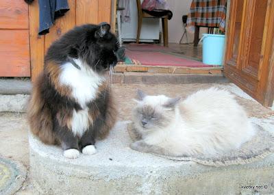Коты Моня и Пушок