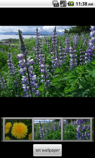 Alaska's Wild Flowers Pro